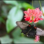 fluture11