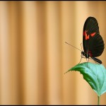 fluture12