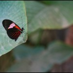 fluture14