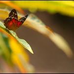 fluture16