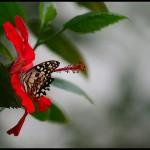 fluture5