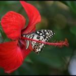 fluture7