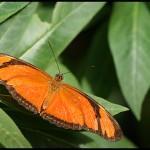 fluture9