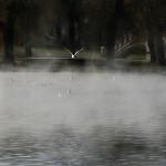 morning-mist2