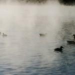 morning-mist3