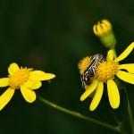 fluture-galben5