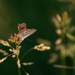 fluturas11