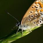fluturas4