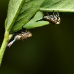 insecte-necunoscute