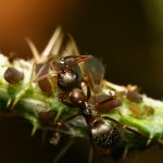 Ant and bettle4