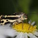 Fluture (4)