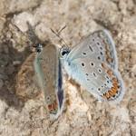 Fluture (12)