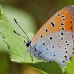 Fluture (13)