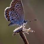 Fluture (15)