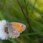 Fluture (16)