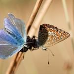 Fluture (18)