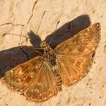 Fluture (20)