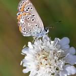 Fluture (5)