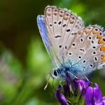 Fluture (7)