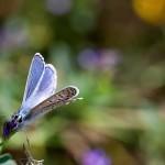 Fluture (8)