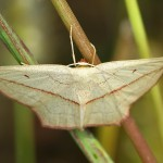 Fluture (3)
