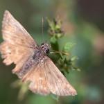 Fluturi (4)