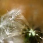 Plante si flori (1)