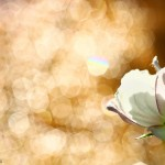 Plante si flori (4)