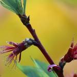 Plante si flori (5)