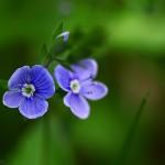 Plante si flori (6)
