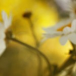 florifrunze (1)