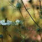 florifrunze (10)