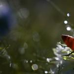 florifrunze (12)