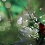 florifrunze (13)