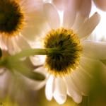 florifrunze (2)