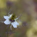 florifrunze (5)