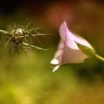 florifrunze (8)