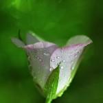 florifrunze (9)