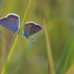 fluturi (2)