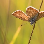 fluturi (3)