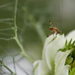 insecte1