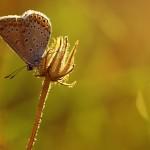 Fluture1.jpg (1)