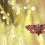 Fluture1.jpg (12)