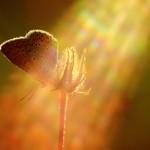 Fluture1.jpg (2)