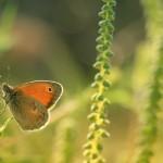 Fluture1.jpg (5)
