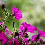 IMG_4463Florentina-Rafaila-galerie-foto-ro-macro-web