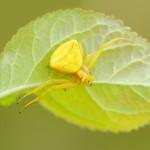 IMG_4655Florentina-rafaila-galerie-foto-ro-web.jpg