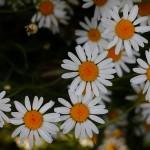 IMG_6215Florentina-Rafaila-galerie-foto-ro-macro-web