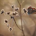 IMG_8131-Florentina-Rafaila-galerie-foto-ro-macro-web