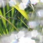 IMG_9030Florentina-Rafaila-galerie-foto-ro-industar-61lz